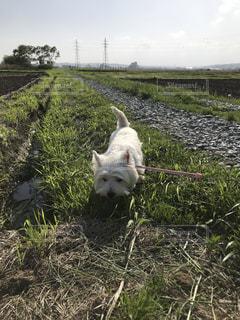 芝生で覆われた畑の上に座っている犬の写真・画像素材[3195328]