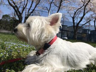 ひもで小さい犬の写真・画像素材[4338949]