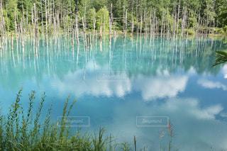 青い池 - No.718419