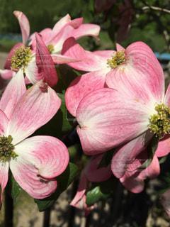 近くの花のアップ - No.718647