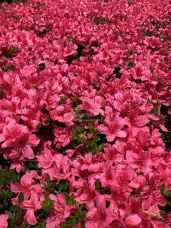 植物の上のピンクの花の写真・画像素材[2174961]