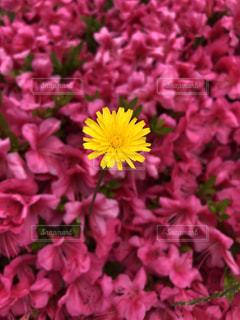 花のクローズアップの写真・画像素材[2174962]