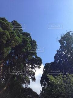 自然の写真・画像素材[21046]