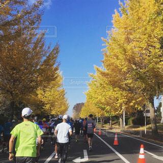 マラソンシーズン、秋の写真・画像素材[1667060]
