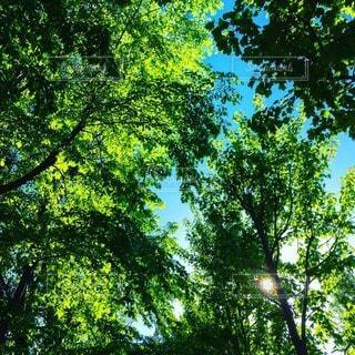 森林の写真・画像素材[20888]