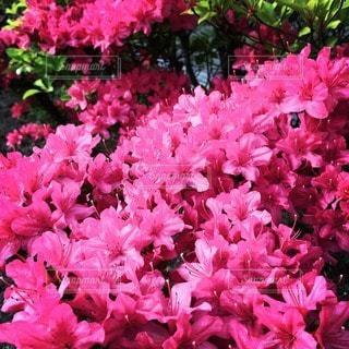 花の写真・画像素材[20907]