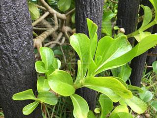 近くの木のアップの写真・画像素材[745655]