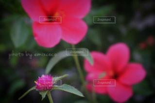 近くの花のアップの写真・画像素材[791343]