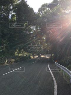 道路と木漏れ日の写真・画像素材[722306]
