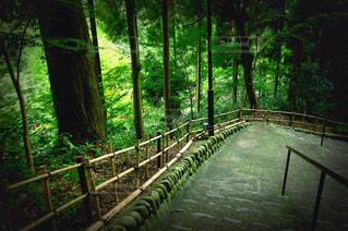 緑豊かな森の道の写真・画像素材[719448]