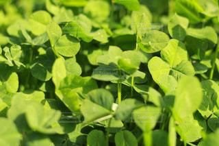 近くに緑豊かな緑のフィールドのの写真・画像素材[724276]