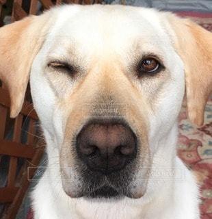 犬の写真・画像素材[96290]