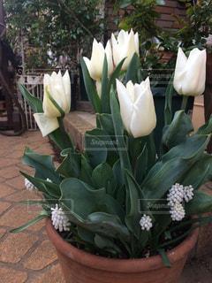 テーブルの上の花の花瓶の写真・画像素材[719980]