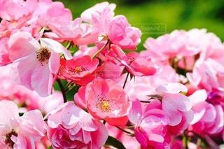 花の写真・画像素材[76280]