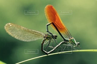 自然の写真・画像素材[81722]