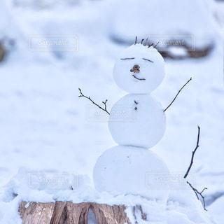 雪の中で立っているクマの写真・画像素材[725274]