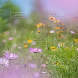 近くの花のアップの写真・画像素材[726603]