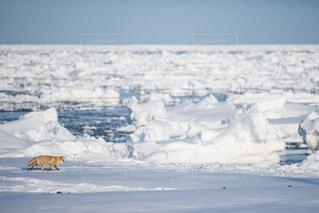 流氷とキタキツネの写真・画像素材[733201]