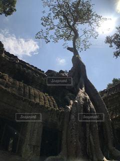 カンボジア遺跡の写真・画像素材[1802014]