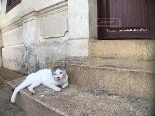 白い建物の上に座っている猫の写真・画像素材[1802026]