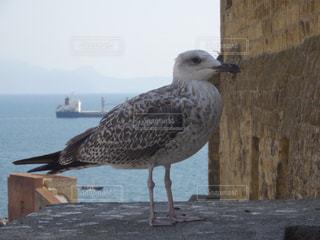 桟橋前に鳥立つの写真・画像素材[720631]
