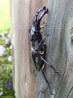 枝の昆虫の写真・画像素材[720644]