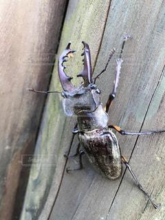 建物の側に昆虫の写真・画像素材[720648]