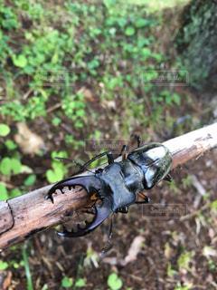 地上で昆虫の写真・画像素材[720650]