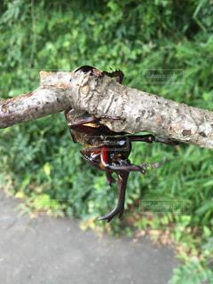 木の上に座っている鳥の写真・画像素材[724243]