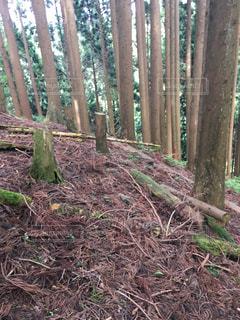 フォレスト内のツリー - No.720673