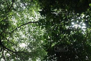 木の写真・画像素材[722443]
