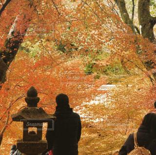 紅葉の季節の写真・画像素材[889636]