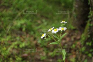 花の写真・画像素材[951782]