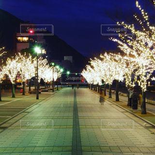 ライトアップされてる並木道の写真・画像素材[987049]