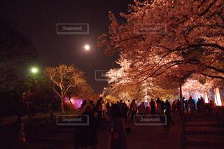 夜桜見物の写真・画像素材[1100549]