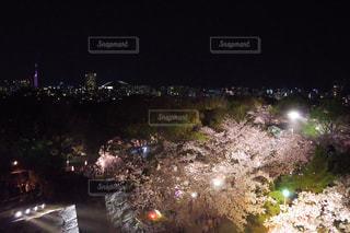 舞鶴公園から見た夜桜と福岡の街の写真・画像素材[1100551]
