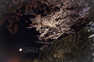 綺麗な夜桜の写真・画像素材[1100555]