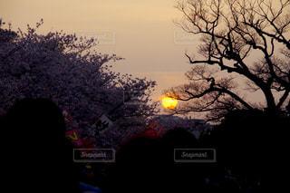 夕日の空と木の写真・画像素材[1100556]