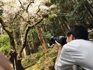一眼で桜を撮る男性の写真・画像素材[1463140]