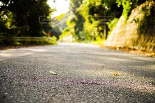 日が差し込む秋の道の写真・画像素材[1664760]