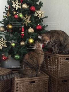 クリスマスツリーの前で仲良しの猫2匹の写真・画像素材[721103]