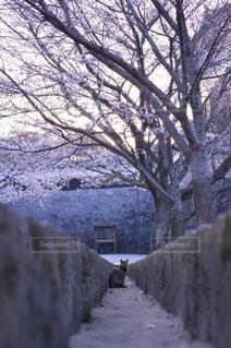 猫の静かな朝の写真・画像素材[724543]