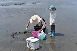 干潟の写真・画像素材[729598]