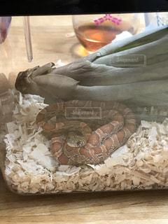エアプランツとヘビの写真・画像素材[721344]