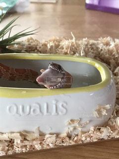 テーブルの上にヘビの写真・画像素材[721348]
