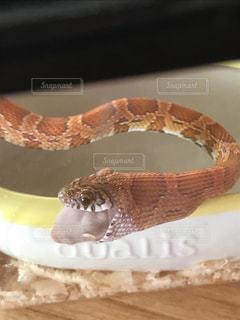 近くに蛇のアップの写真・画像素材[721349]