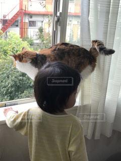 ウィンドウの前に立っている猫の写真・画像素材[721356]