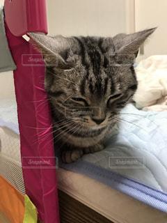 ベッドの上で横になっている猫の写真・画像素材[721360]