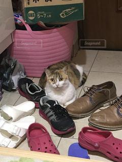 いくつかの靴の上に横たわる猫の写真・画像素材[721361]