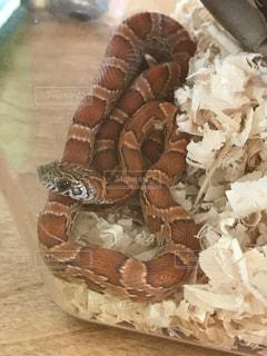 近くに蛇のアップの写真・画像素材[721364]